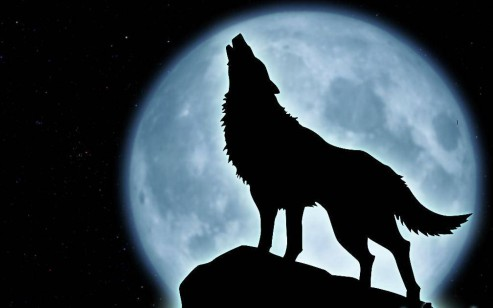 howling-wolf-78505