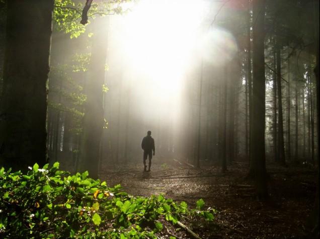 marcher-vers-la-lumière-dans-la-forêt-1024x765