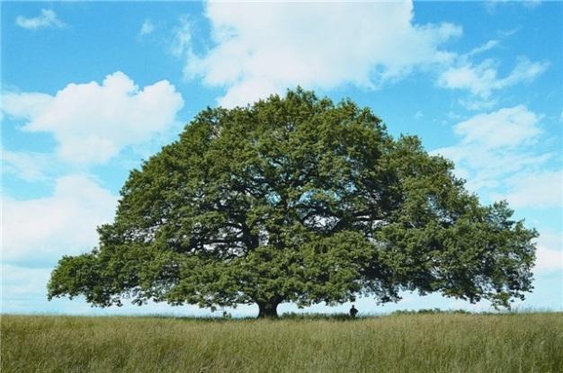 arbre-petition