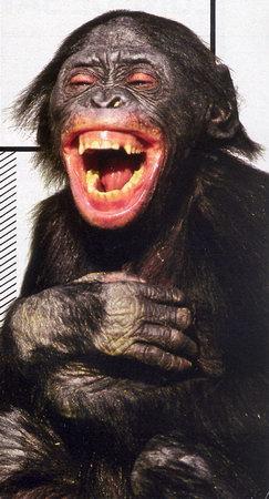 chimp-rire