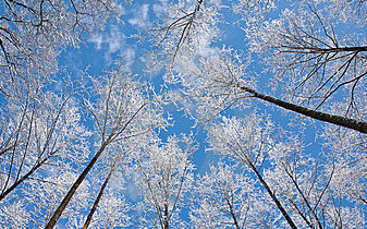 l-arbre-d-aulne-couronne-la-neige-enveloppée-contre-le-ciel-bleu-18982538
