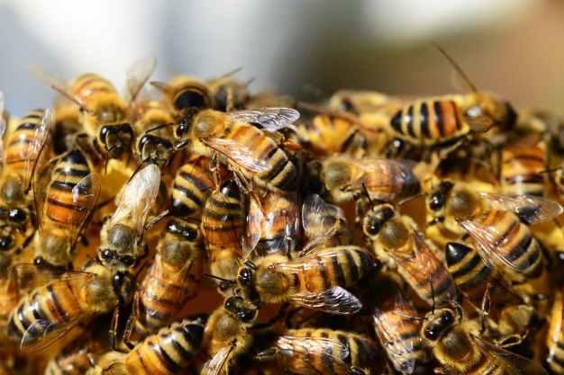 abeilles ailes alveole bandes